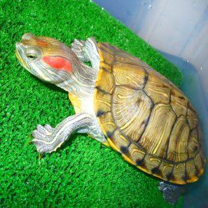 Аксессуары для водных черепах